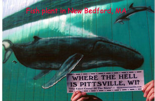New Bedford fish plant